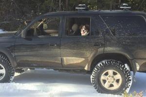 Мужчина нечасто выкидывал мусор из машины, что однажды спасло жизнь ему и его собаке
