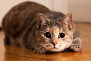 Что кошки на самом деле думают о людях