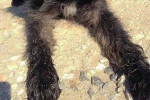 Бродячая собака спасла девушку, и та вернулась за ней с другого конца Земли