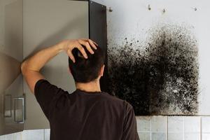 Простой способ очистки стен от черной плесени