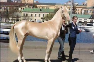 """Секрет красоты """"небесного скакуна"""", названного прекраснейшей лошадью в мире"""