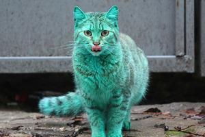 Зеленый кот, живущий в Болгарии, вызывает сочувствие не только местных жителей