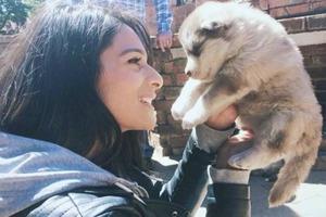 Девушка и представить себе не могла, приютив маленького щенка, что он вырастет до таких размеров