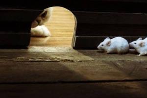 Как обычная кулинарная фольга поможет избавиться от мышей в доме