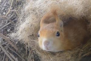 Белка свила гнездо за окном мужчины и родила бельчонка: первые дни необычного семейства (видео)