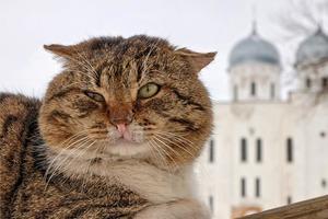 Поблажки для котов: почему кошек пускают в церковь, а собак - нет
