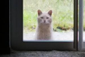 Женщина купила дом с необычным постояльцем: старые владельцы оставили ей 12-летнего кота