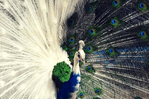 Генетическая лотерея: фото птиц и животных с невероятно красивыми мутациями