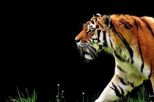Какое животное вы увидели первым? Этот тест поможет найти ответ на свою проблему