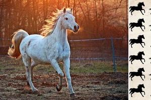 Тест на внимательность: необходимо найти разных лошадей за 30 секунд