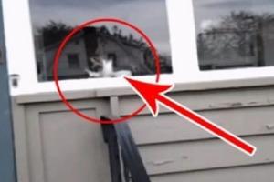 Почтальону не верили, что делает кот, когда он приносит газеты. Поэтому мужчина записал видео
