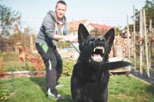Знакомый ветеринар рассказал, почему собаки гавкают на одних людей, в то время как к другим относятся совершенно спокойно