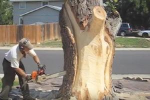 Во дворе дома стояло спиленное дерево. Новый хозяин решил его не убирать: фото