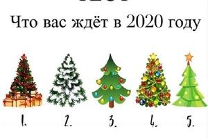 Гадание на елях: выбираем деревце и читаем предсказание на следующий год