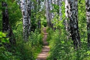 На работу Татьяне приходилось ходить через лесок. Однажды она услышала позади шаги