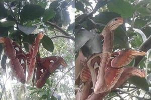 Подружки поднялись на гору и увидели «трехголовую змею». Одна из них тут же сбежала, а вторая не испугалась и разбогатела