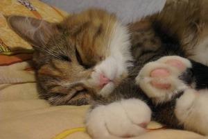 Замучила кошачья шерсть на простынях: избавилась по совету опытной заводчицы
