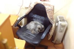 Кошка так хотела жить в офисе,что ее пустили: вскоре узнали, что это не случайно