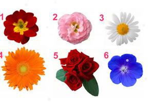 Какой цветок самый красивый? Сделав выбор, вы узнаете тайну своей женственности