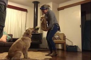 Хозяйка купила нового щенка: реакция ее взрослого питомца растопит ваше сердце (видео)