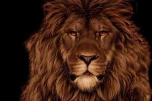 На картинке есть не только лев, но и маленький грызун. Найти его не так просто