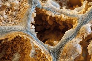 Незабываемое зрелище: как выглядят под микроскопом кофе, соль, сахар и водка