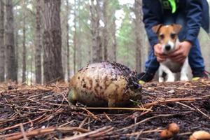 """Мужчина прогуливался с собакой по лесу и обнаружил странный """"камень"""""""
