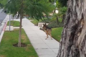 Хозяин решил подшутить над собакой и спрятался: реакция собаки