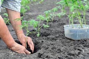Посевной календарь на апрель 2020 года. В какие дни лучше сажать рассаду, чтобы иметь хороший урожай