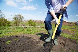 На заметку дачникам: эксперты рассказали о бесполезности такой процедуры, как перекапывание огородов