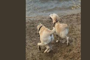 Смех взорвал интернет, когда пользователи выложили панорамные фото собак