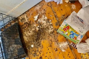 Арендодатель сдал жилье на полгода: по истечении срока он его не узнал (фото)