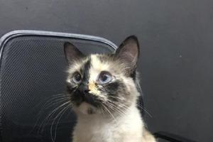 Кошка увидела, что малыш ползет к крутой лестнице: видео