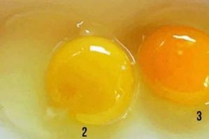 Какое из 3 яиц самое полезное? 99 % людей дают неправильный ответ