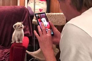 Котенка взяли из приюта. Когда его фотографируют, он расплывается в улыбке