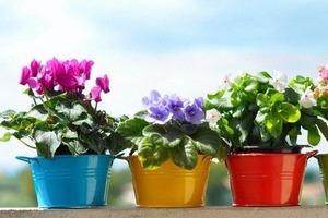 Бабушка рассказала, какие цветы нельзя нести в дом: всегда помню ее наставления
