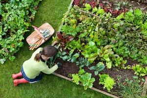 В середине апреля нельзя садить огород. Посевной календарь на апрель-2020