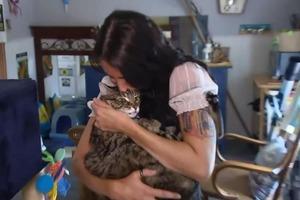 Спасла любимицу. Привязавшись к кошке, няня украла ее из дома, в котором работала, и сама пришла в полицию