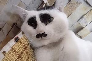 """Кошка, которая """"постоянно хмурится"""", покоряет соцсети: фото"""