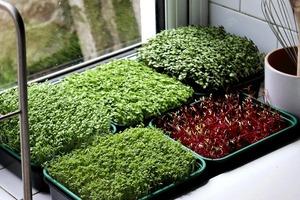 Осенняя сенсация-тренд для любителей домашних растений: дизайнеры призывают выбросить горшки. Модно видеть корни и выращивать микрозелень