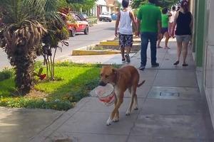 Собака очень хотела пить: она додумалась, как попросить воды у людей