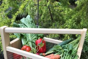Из подручных средств сделали дома удобную садовую корзину: можно собирать урожай, переносить цветы и много чего еще