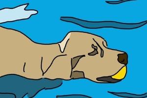 Любит плавать или гулять? Любимые занятия вашей собаки могут рассказать о ней много интересного
