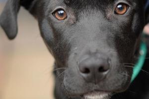 """Covid-собака может распознавать коронавирус у 250 человек в час: как проходят """"экзамены"""" и обучение"""