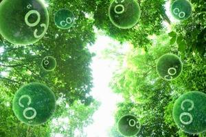 Высокие темпы гибели деревьев, которым не один десяток лет,угрожают резким выбросом накопленного углекислогогаза