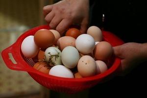 Муж всю жизнь отказывался от куриных яиц из-за холестерина. Поговорив с врачом, я узнала, что опасности в них нет, особенно если соблюдать н