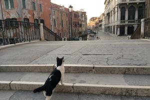 Накануне открытия Италии для туристов венецианец выложил в Сеть фотоэкскурсию по пустующим улицам и каналам Жемчужины Адриатики