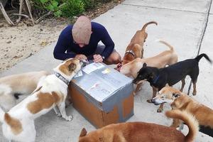 Пара переехала жить на остров в Таиланде и приютила 15 бездомных собак. Теперь они живут большой дружной семьей