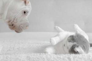 Как кошка с собакой: вряд ли кто-то сможет не улыбнуться, глядя на фотографии этих пушистых комочков