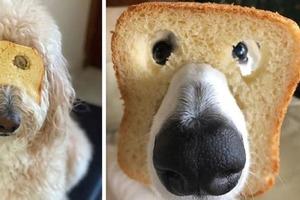 Новый челлендж с кусочком хлеба явно пришелся по душе домашним питомцам (фото)